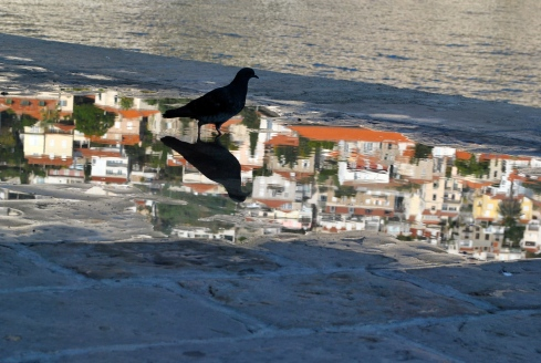 THE PIGEON REFLECTS ON CROATIA