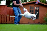 FAT DOG FLIES