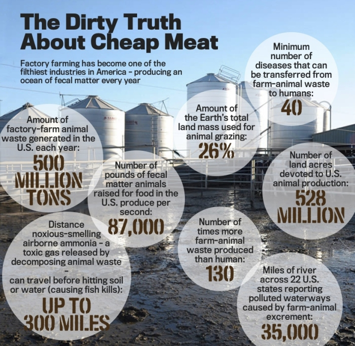 DIRTY FACTS OF CHEAP MEAT