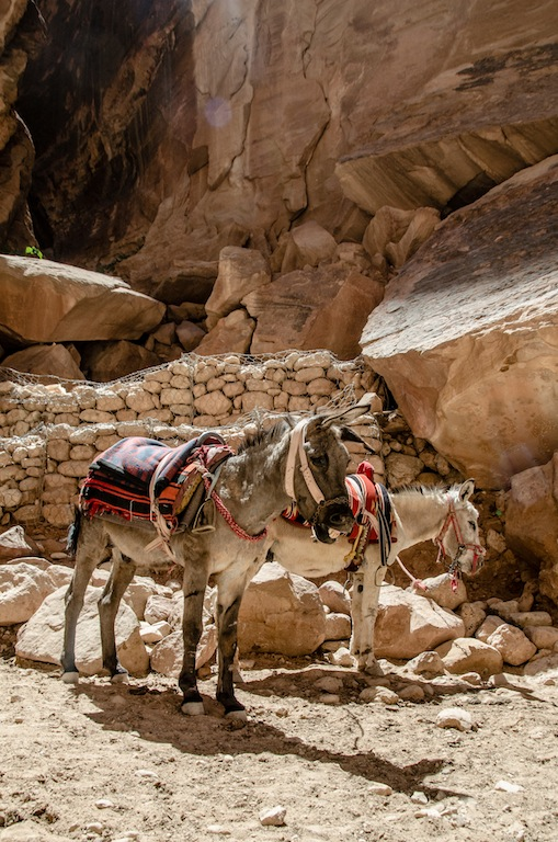 WAITING DONKEYS