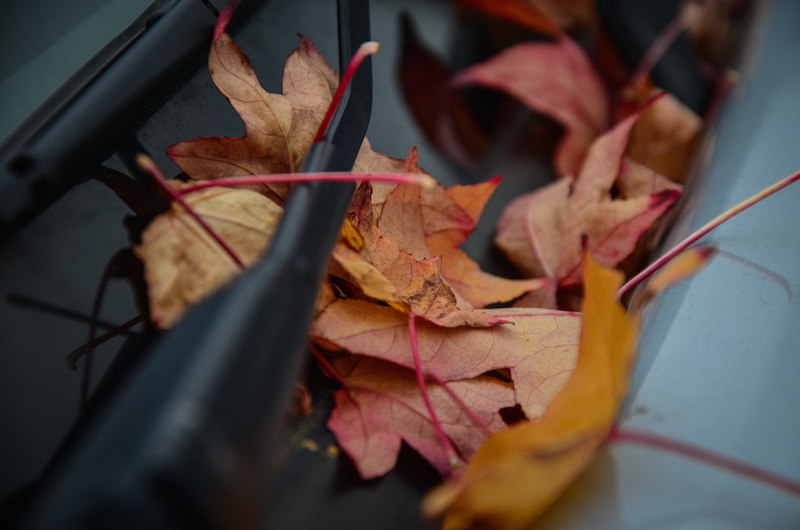 FALL LEAVES UNDER WIPERS